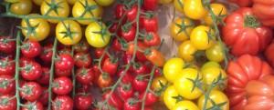 TomatoesLR copy